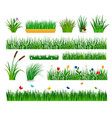 growing grass template for garden vector image vector image