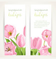 pink and white tulips on two vertical blank vector image vector image