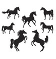 Silhouettes of arabian horse