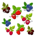 Strawberry raspberry blueberry and blackberry vector image vector image