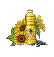 sunflower oil sketch seeds sunflowers and vector image vector image