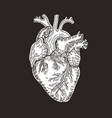 vintage engraved human heart vector image vector image