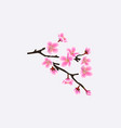 sakura tree branch isolated on white background vector image vector image