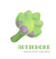 fresh artichoke isolated on white background vector image