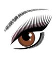 eye brown vector image vector image