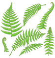 green fern leaves sketch vector image vector image