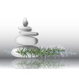 rosemary herb leaves with stones vector image vector image