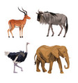 white background with realistic colorful wild vector image vector image