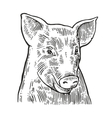 Pig head isolated on white background vector image vector image