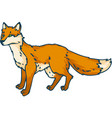 red standing fox vector image