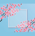 blossom sakura or cherry flowers on a blank frame vector image vector image