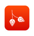 branch of hops icon digital red vector image vector image