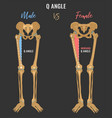 female and male skeleton differences vector image vector image