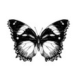 hand drawn butterfly on white background vector image vector image