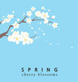 spring cherry blossom template vector image