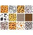 animal fur texture nature abstract wildlife vector image vector image