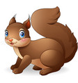 cartoon funny squirrel isolated on white backgroun vector image vector image