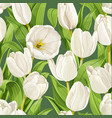 seamless pattern beautiful white tulips vector image vector image