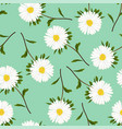 white aster daisy on green background vector image vector image