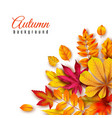 autumn leaves background autumnal border with vector image vector image