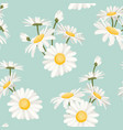 daisy chamomile spring summer flowers pattern vector image