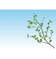Summer season nature Branch with green leaves vector image vector image