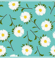 white aster daisy on green teal background vector image vector image