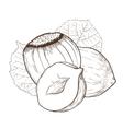 Hazelnut isolated on white background vector image vector image
