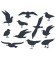 seagull silhouette set isolated on white vector image vector image