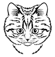 cat kitten vector image vector image