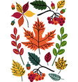 colorful autumn leaves and berries floral vector image vector image