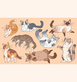 cute cats funny different breeds kittens pets vector image vector image