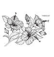 hibiscus flower drawing vector image vector image