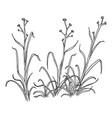 sketch wild growth grass vector image vector image