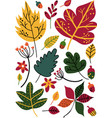 colorful autumn leaves and acorns floral seamless vector image