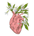 human heart with flowers vector image