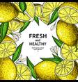 lemon label drawing citrus fruit frame vector image vector image