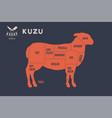 meat cuts poster butcher diagram - kuzu vector image vector image