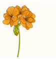 Yellow geranium flower drawing vector image