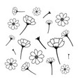 sweet cosmos flowers hand drawn black flower vector image