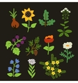 Decorative plants set vector image