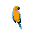 parrot bird cute colorful budgie home pet vector image vector image