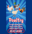 poultry concept banner comics isometric style vector image