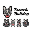 french bulldog with different gestures vector image