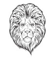 hand drawn lion head isolated over white vector image vector image
