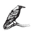 raven side view hand drawing vector image vector image