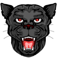 black panther head vector image vector image