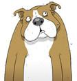British bulldog cartoon character vector image