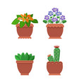 browallia cactus collection vector image