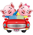 cartoon couples pig driving a car vector image vector image